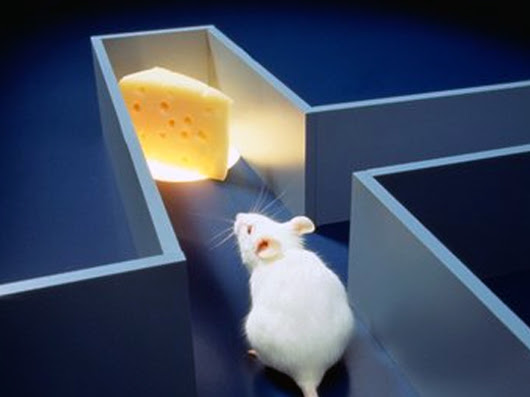 mouse-in-maze