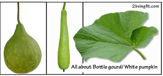 Bottle gourd / White pumpkin – nutrition, proven benefits, uses