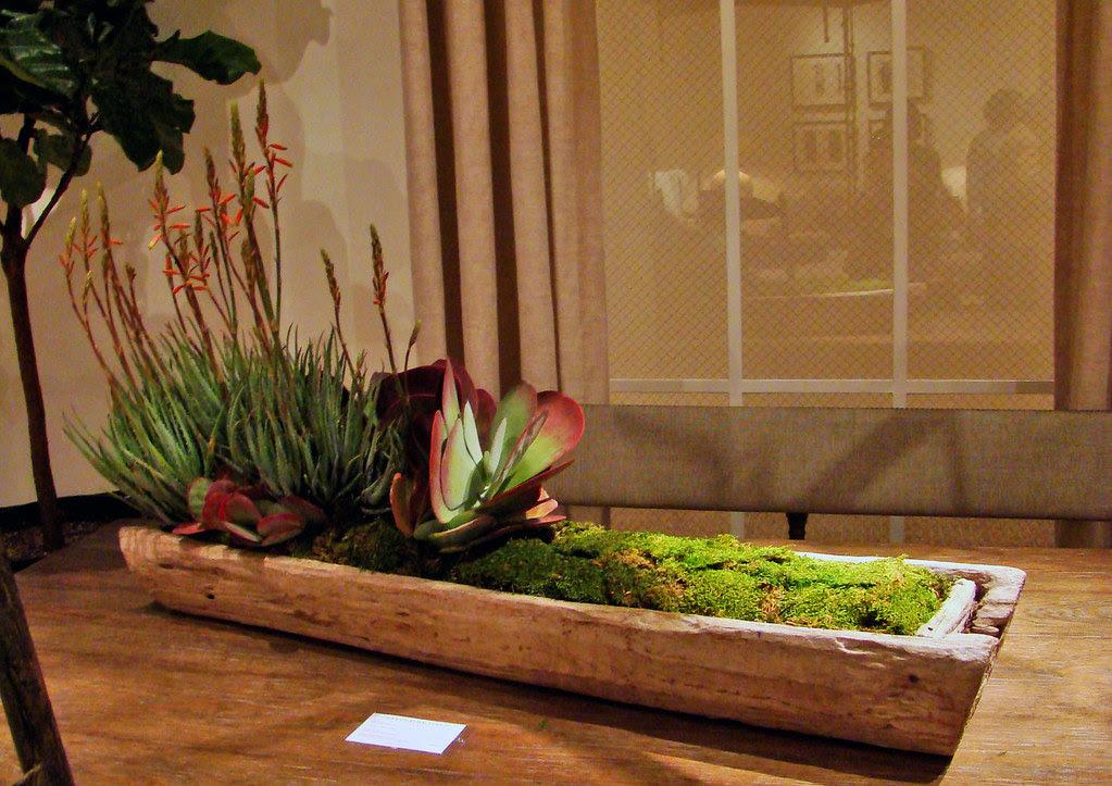 DSC03941 succulents in bark