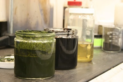 Algae converted to crude oil in less than an hour, energy department says - NBC News.com