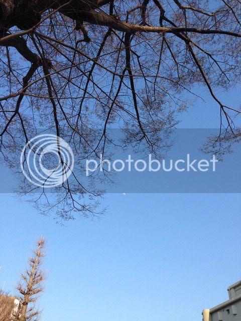 photo IMG_7314_zpsfakujecq.jpg