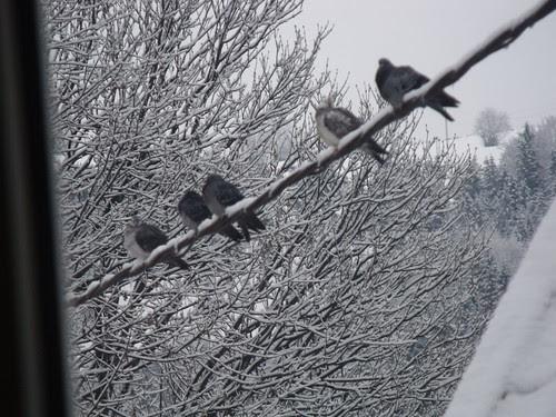 Hiver et des oiseaux by martamaghiar
