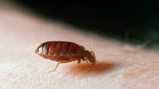 Are There Bed Bugs In Your Smart Phone?