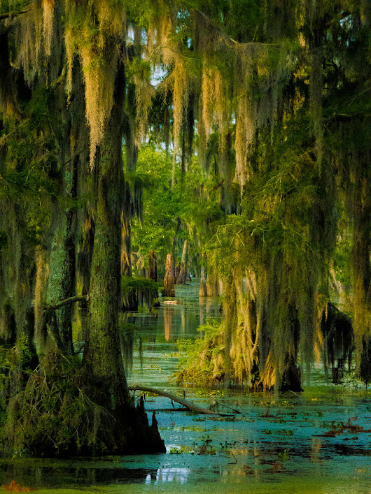Swamp Curtains I by Kimo Fernandez