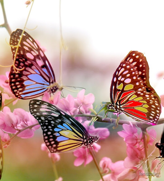 butterflies conference by lensbaby