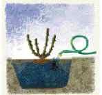 PlantingRoses2985.jpg