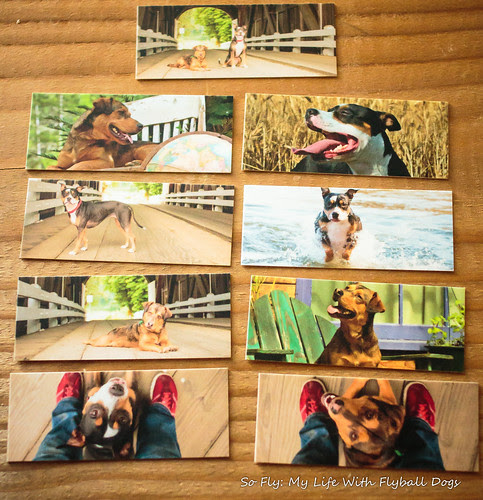 Moo Mini Cards-6638