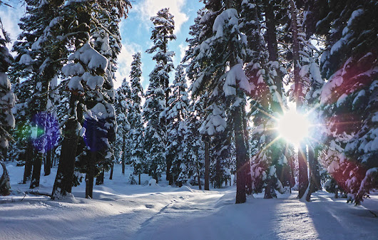 Cross-Country Skiing at Echo Summit (via Forest Service Road 1104)