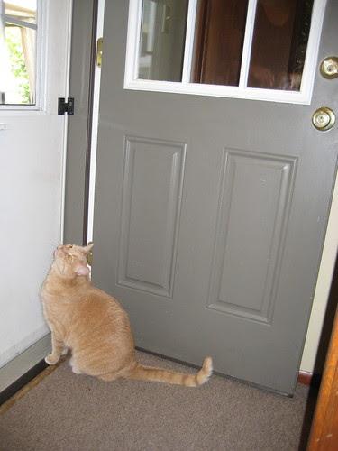 Merlot at the back door