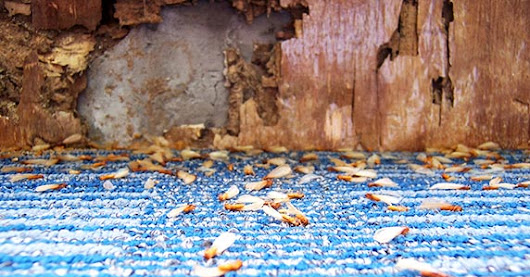 Should You Buy a Home With Termite Damage? | Bankrate.com