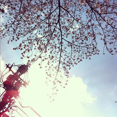 A calm #spring afternoon after the #storm in #Tokyo. #cherry #blossoms are out bathing in #sunlight.