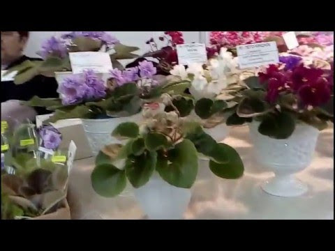 The exhibition of violets and cactuses