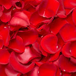 3500 Red Rose Petals Fresh Petals Wholesale by GlobalRose