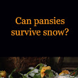 Can pansies survive snow? What you need to know - Running A Household