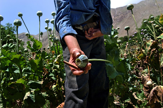 Afghanistan is growing more opium than ever ahead of US withdrawal