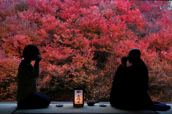 TOYOOKA, JAPAN - NOVEMBER 12:  A Buddhist Monk named Sanada Yoshinaga, 76 years old, (R)  drinks Japanese tea as a ritual with a guest in front of the autumn leaves at Ankokuji Temple on November 12, 2015 in Toyooka, Japan. In mid November when the autum