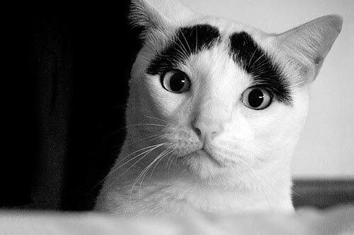 funnycateyebrows/not my picture