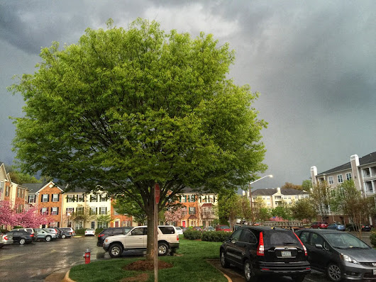 Storm in Spring