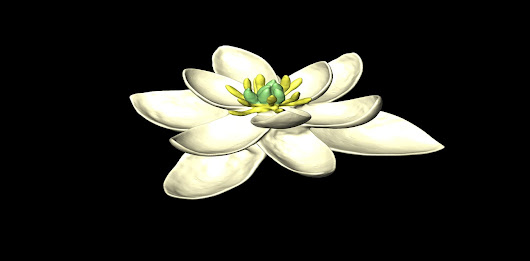 Revealed: the first ever flower, 140m years ago, looked like a magnolia