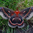 Moth Eyes Help Create Efficient Solar Cells