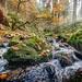 Silberbachtal # 14 - Bach, Herbstlaub und bemooste Felsen - Creek, autumn foliage, and mossy rocks