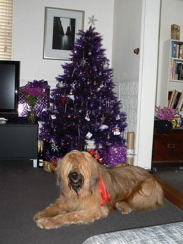 Oscar, Christmas 2010