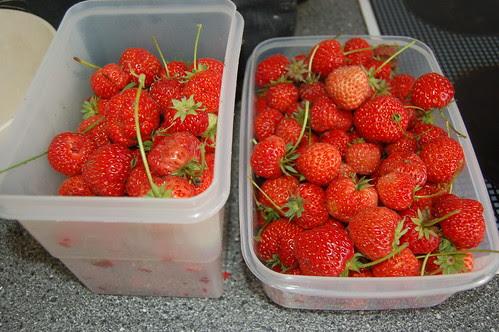 strawberries Aug 10