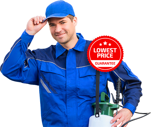 Building & Pest Inspection Sunshine Coast | Pre-purchase Inspections & Condition Report