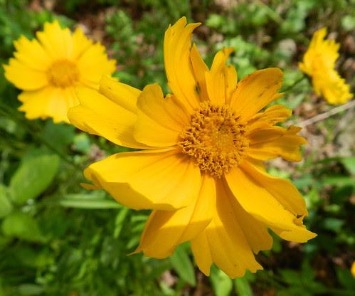 todayflowersDSCN7386