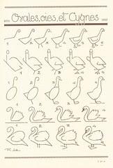 les animaux 12