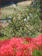 02 higanbana down the valley