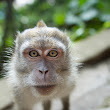 Monkey Portrait - South East Asia | Travel Photography