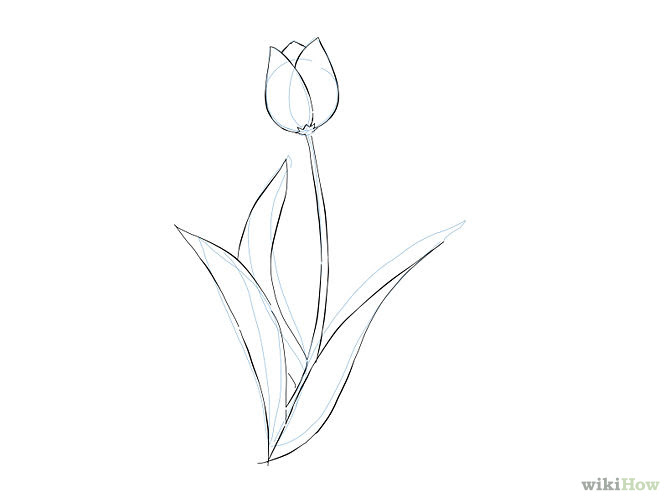 Free Simple Flower Drawing Download Free Clip Art Free Clip Art On Clipart Library