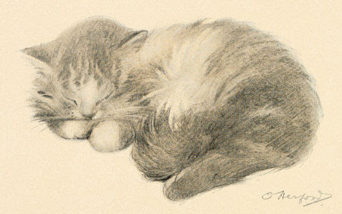A kitten curled on its side asleep, front paws tucked up under its chin