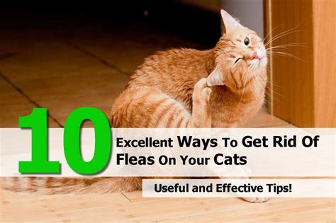 Kill sewer gnats, bed bugs photos bed bug feces, easy ways to get rid of fleas on kittens, how