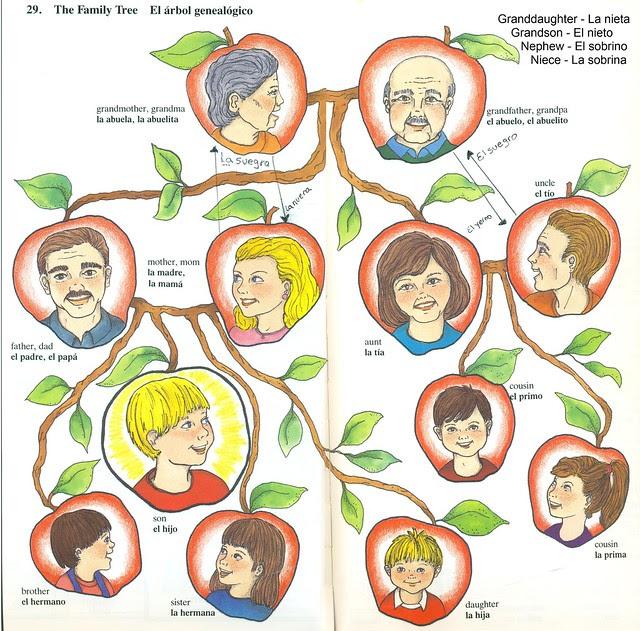 Nombres Del Arbol Genealogico En Inglés Imagui