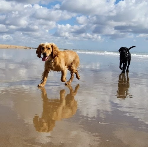 Dog Walking Services in Hastings and St Leonards. The best dog walks