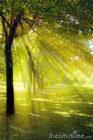 Tree With Rays Of Light