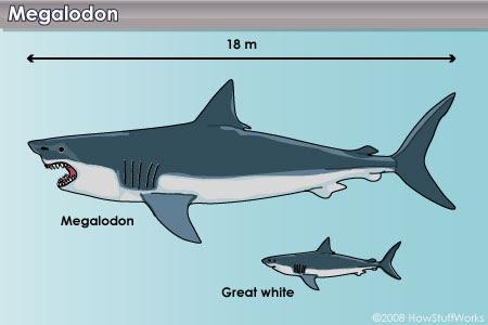 tz4ffc837a Maior Megalodon tubarão no mundo
