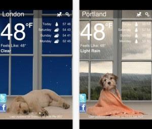 weather-puppy