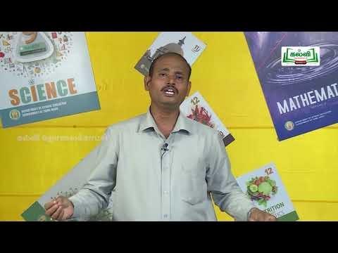 யாமறிந்த மொழிகளிலே Std 11 தமிழ் திருச்சாழல் Kalvi TV