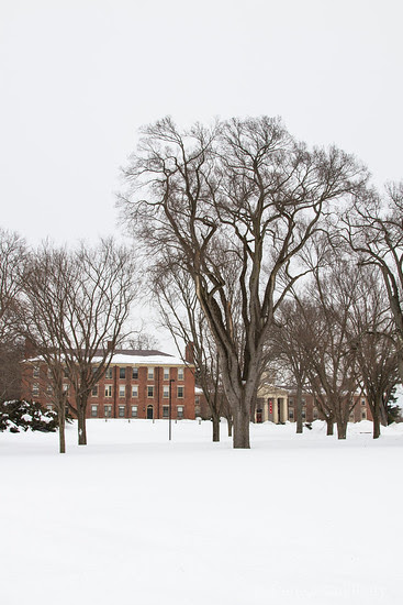 trees stand tall, decorating a winter landscape