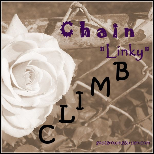 Chain Linky Climb, by Angie Ouellette-Tower for godsgrowinggarden.com