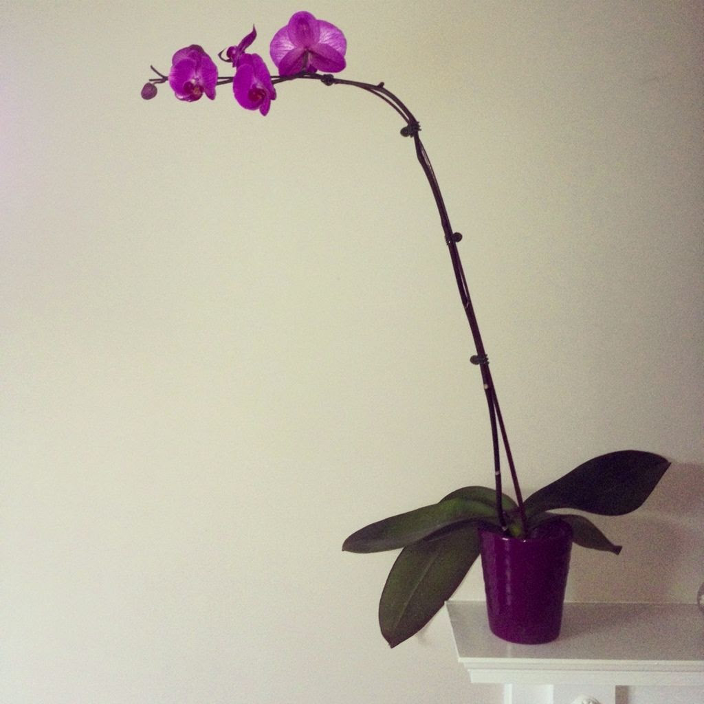 2.13.12, I was given this beautiful orchid. Any tips of how to keep it alive an healthy?