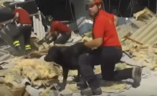 Search Dogs Save Children After Italy's Devastating Earthquake | Care2 Causes