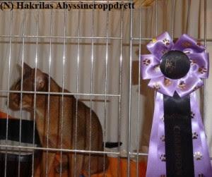 Estilo i buret, og Estilo sin kjempefine Championsløyfe hengende på buret :)