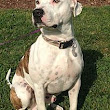 Stewart, TN - Pit Bull Terrier Mix. Meet Clyde a Dog for Adoption.