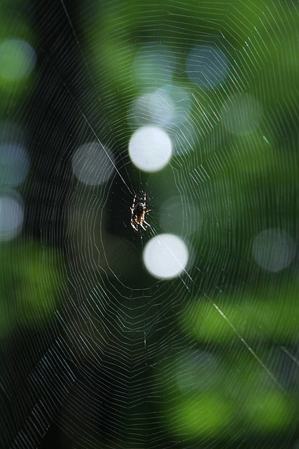 Spider, George Himes Park