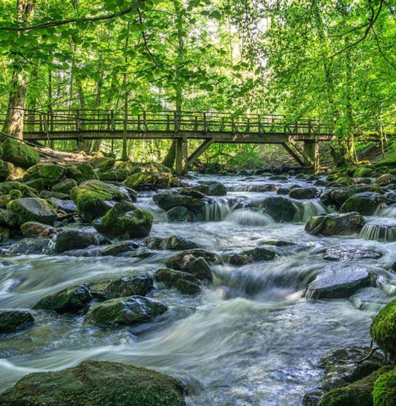 6500 Gambar Manfaat Air Bagi Manusia Hewan Dan Tumbuhan Terbaru
