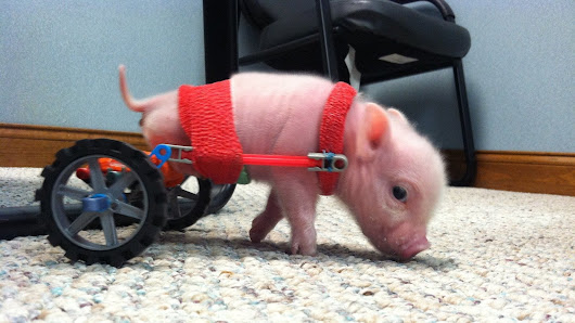 Need A Pick-Me-Up? Check Out These Animals Made Happier By Prosthetics